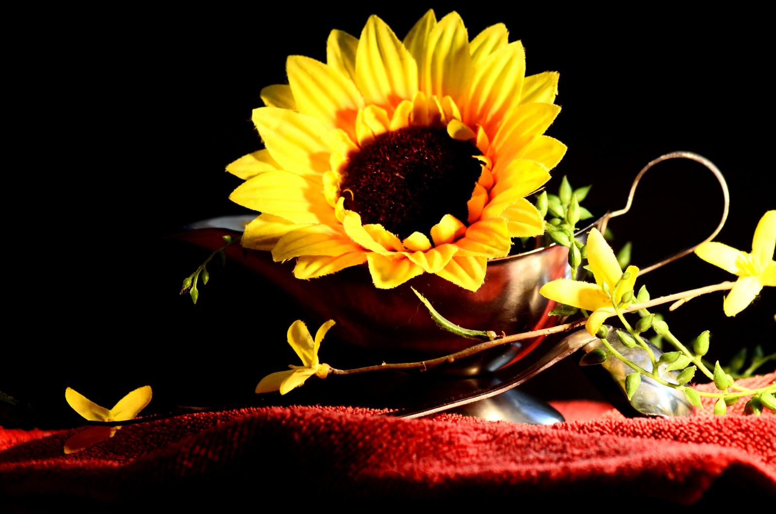 Fondos De Pantalla : Girasol, Flor, Amarillo, Amarillo