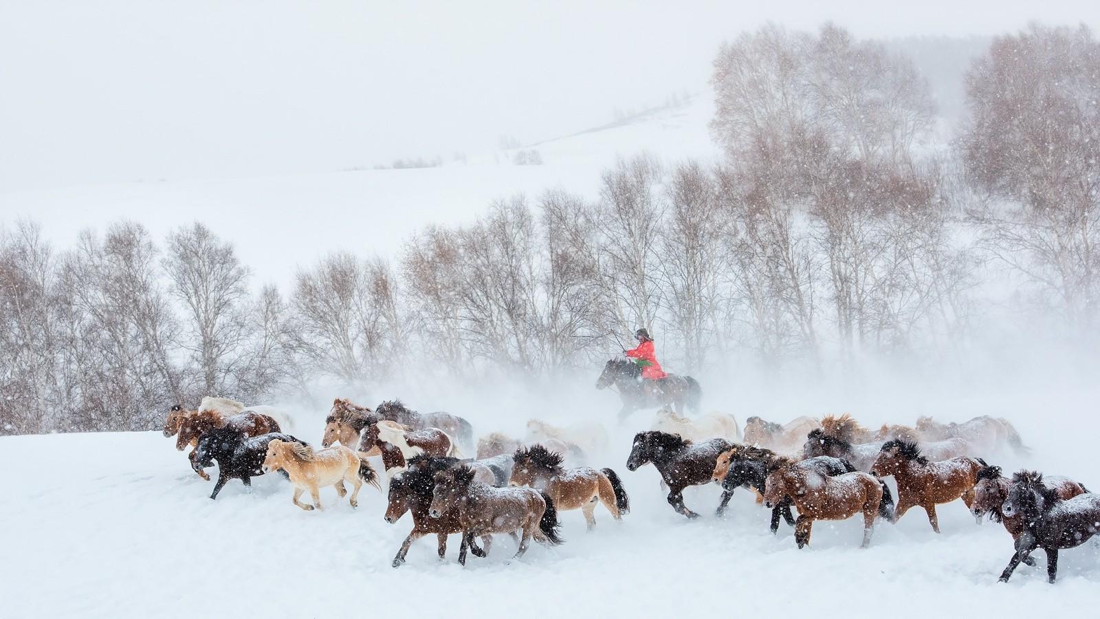 Fond d 39 cran animaux la nature cheval neige hiver for Fond ecran hiver animaux