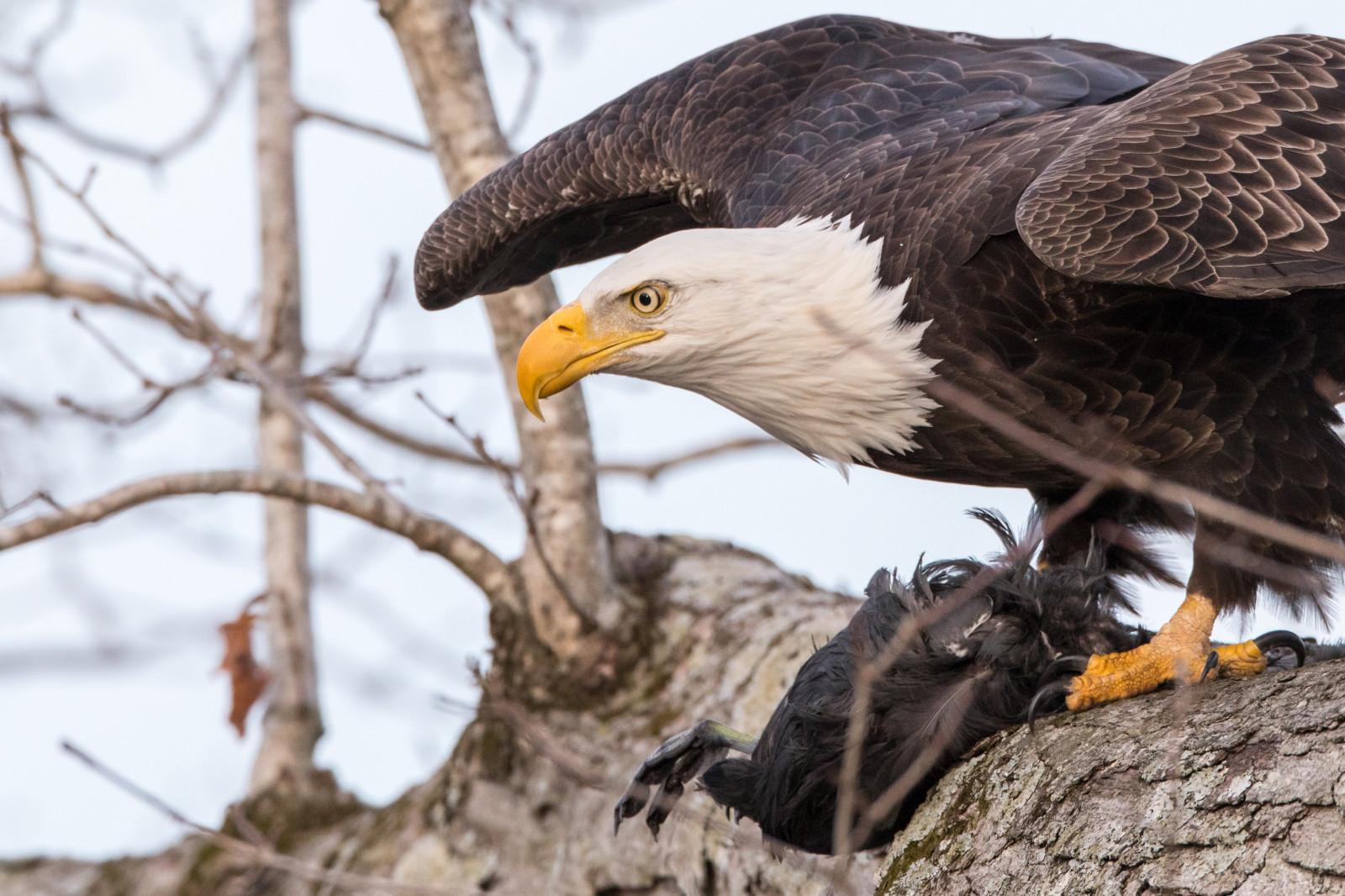 как скопировать фотографии хищных птиц одной приятной вещью