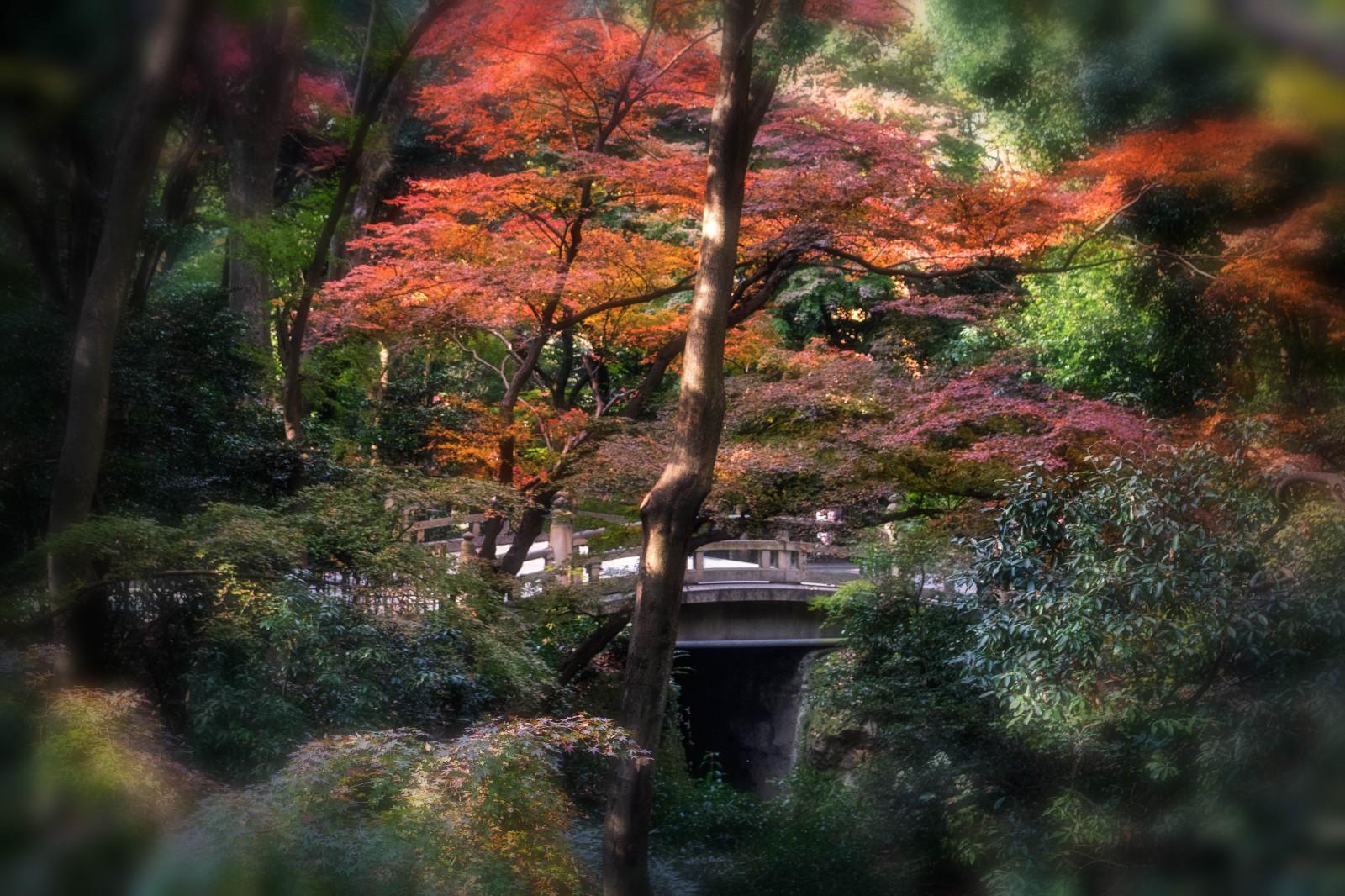 Fondos de pantalla jap n luz de sol paisaje bosque for Arboles jardin japones
