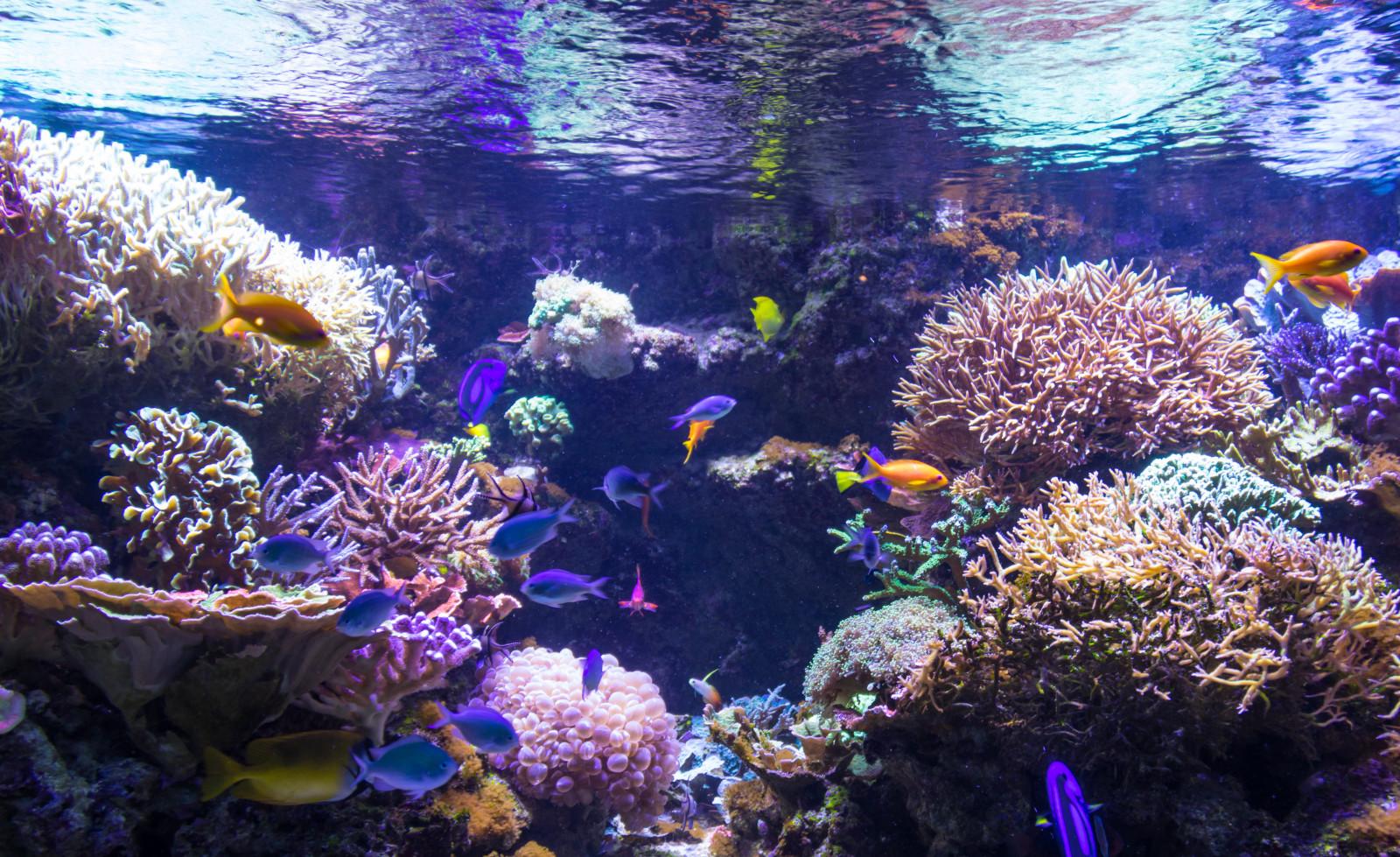 fond d 39 cran poisson sous marin r cif de corail aquarium la biologie malm husslott malmo. Black Bedroom Furniture Sets. Home Design Ideas