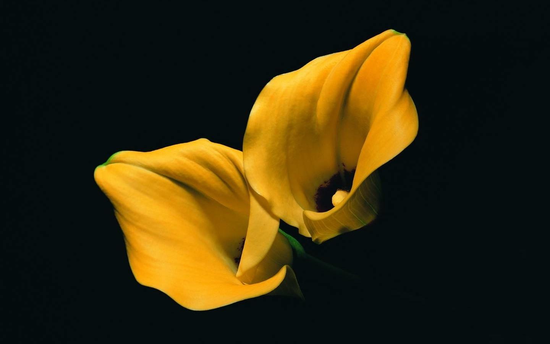чудо-вещь картинки цвет черный и желтый представленных ниже растений