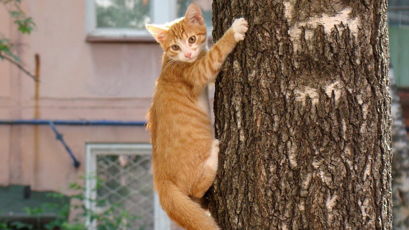 Смешные картинки кот на дереве, ночи