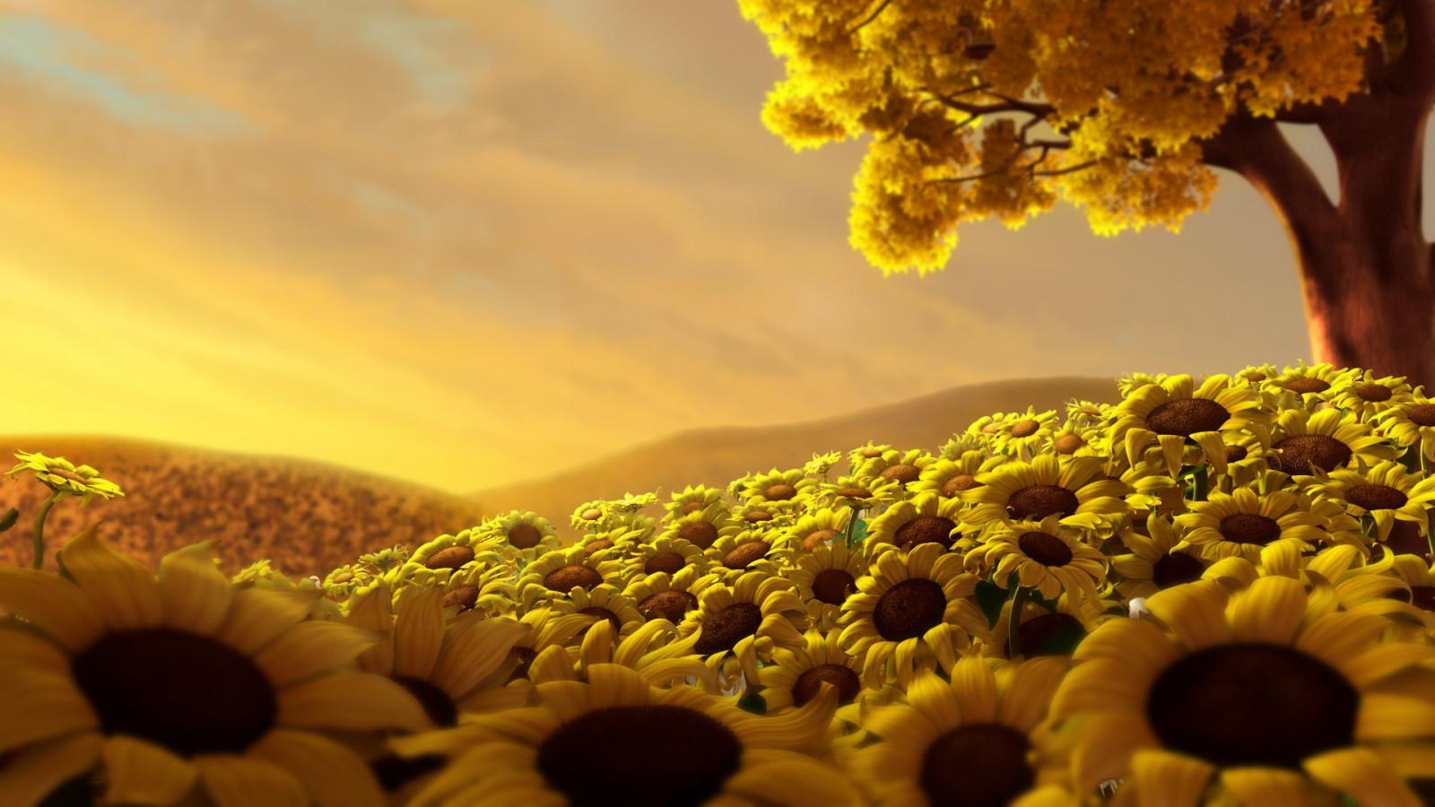 デスクトップ壁紙 日光 風景 日没 フラワーズ 自然 空