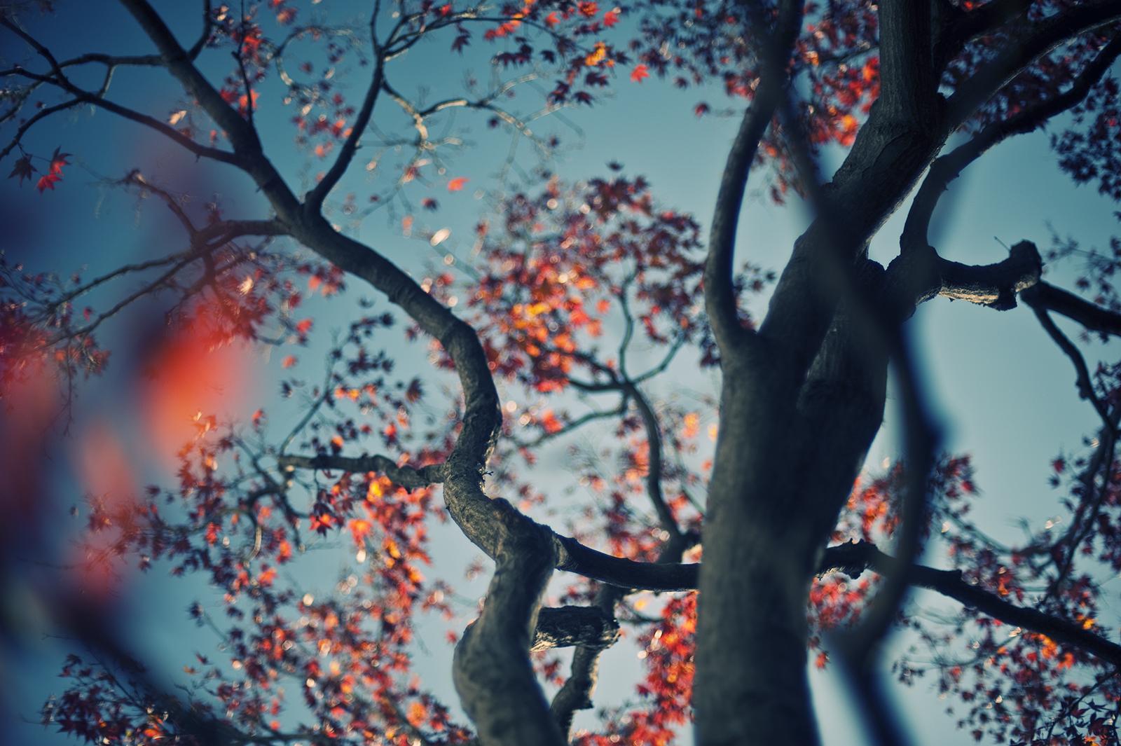 Fondos de pantalla : Japón, luz de sol, hojas, naturaleza, reflexión ...