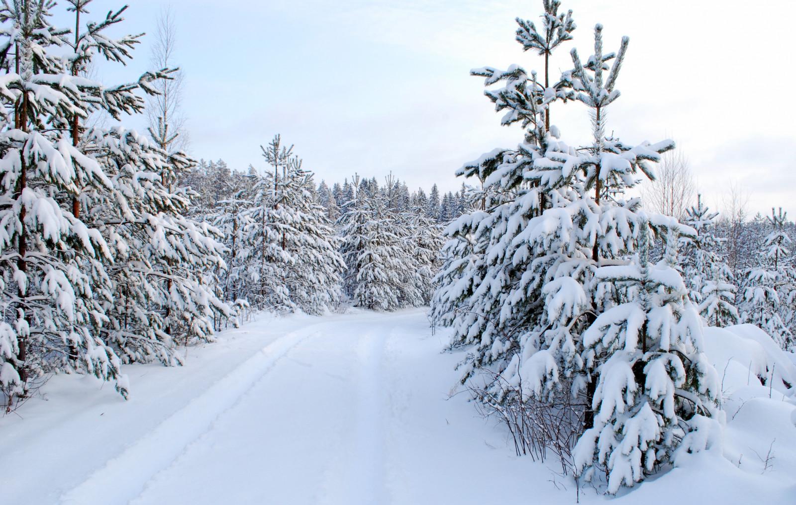 Foto Di Natale Neve Inverno 94.Sfondi Alberi Bianca La Neve Inverno Strada Ramo Leone