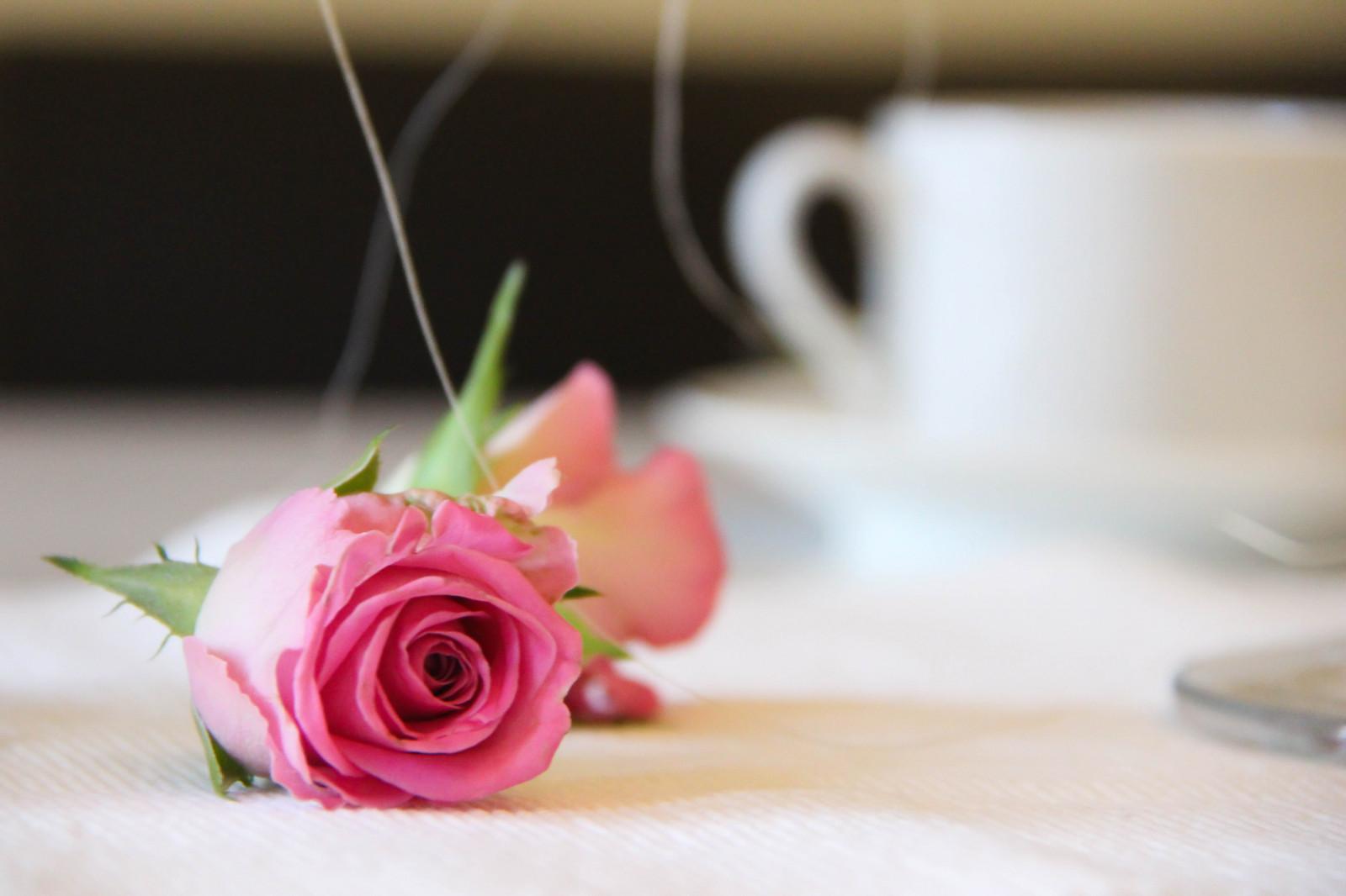 Fondos De Pantalla Flor Rosado Arreglos Florales