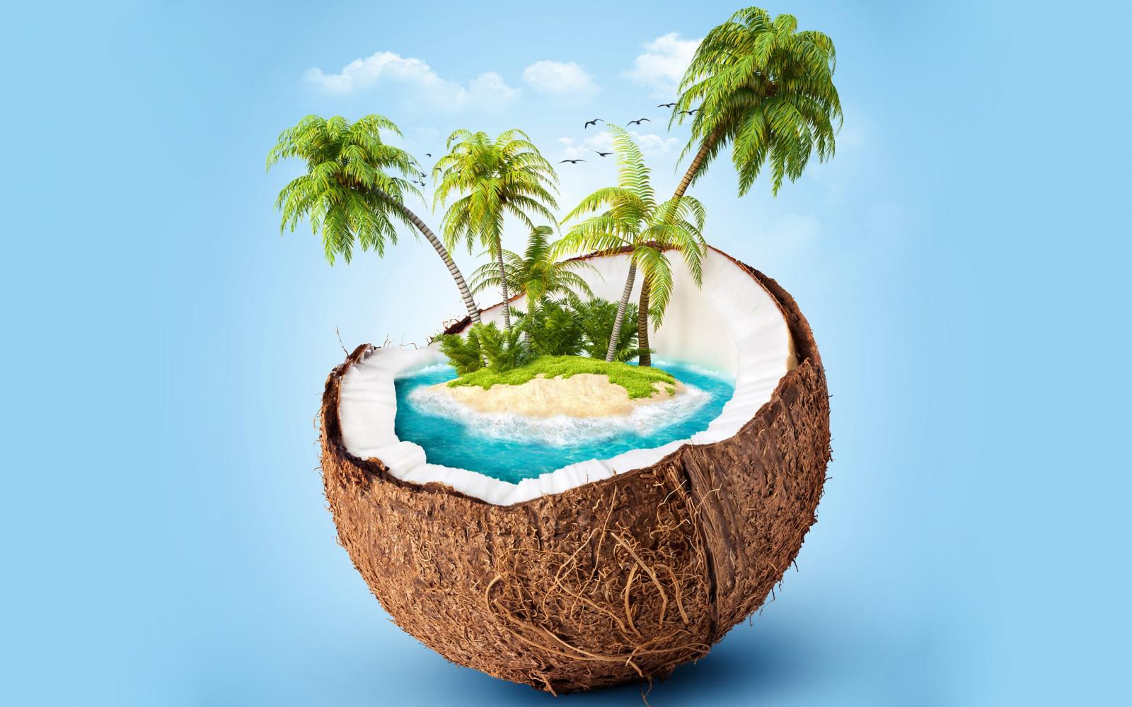 fond d 39 cran rendre fond bleu branche palmiers le pot de fleur cocos arbre feuille. Black Bedroom Furniture Sets. Home Design Ideas