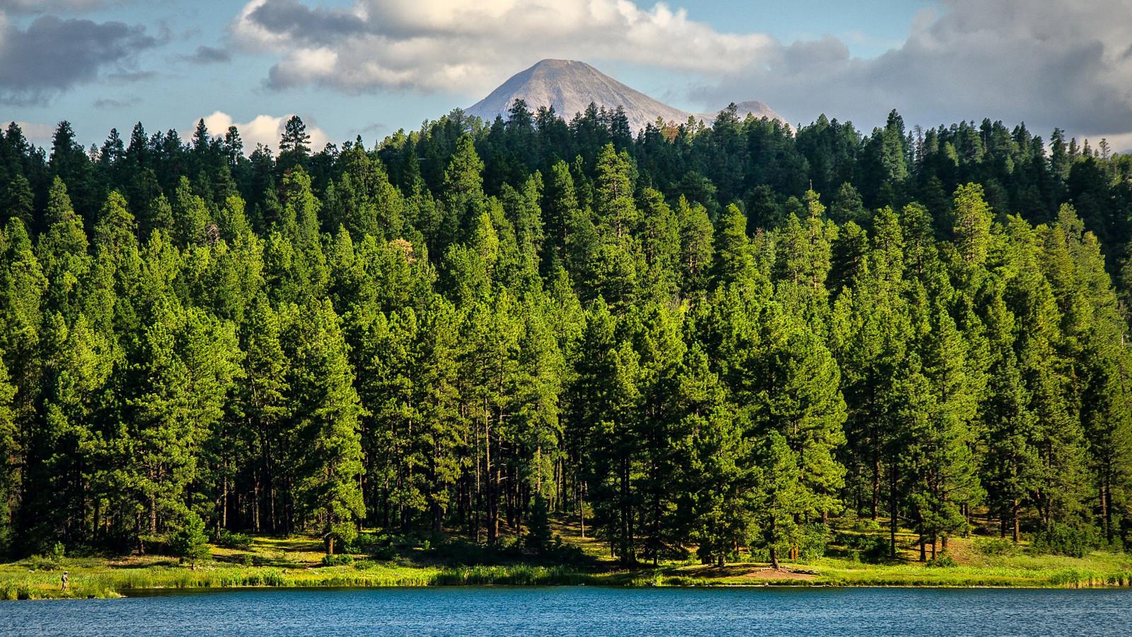 Fondos De Pantalla : Paisaje, Bosque, Lago, Naturaleza