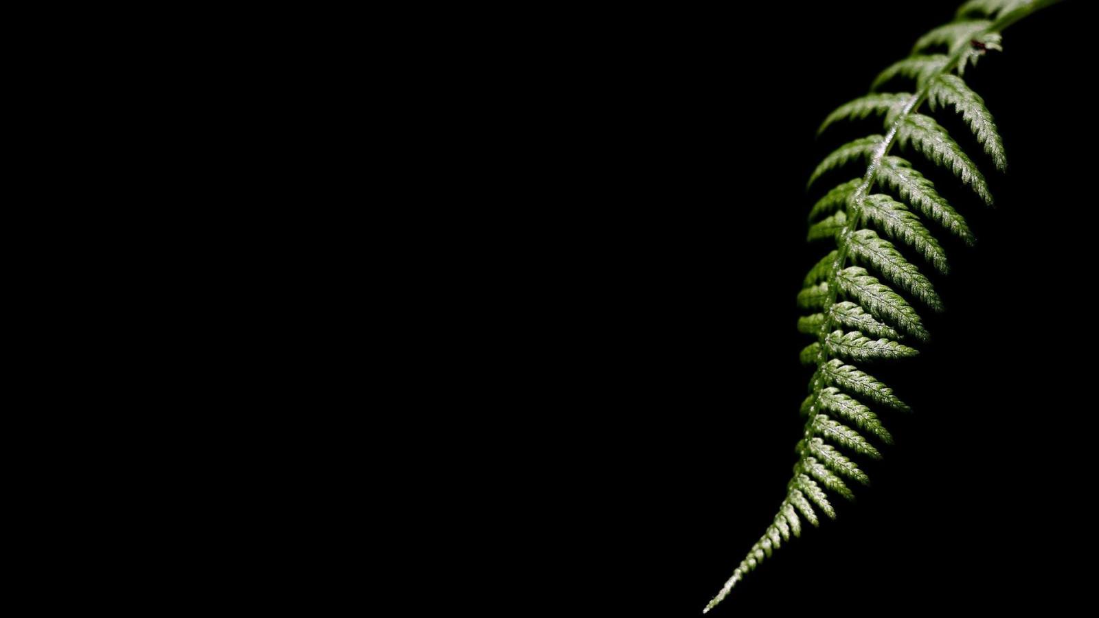 Wallpaper : 1920x1080 px, black background, ferns, green ...