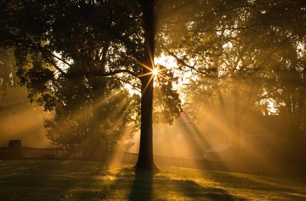 факты красивые картинки солнечного света сладкой