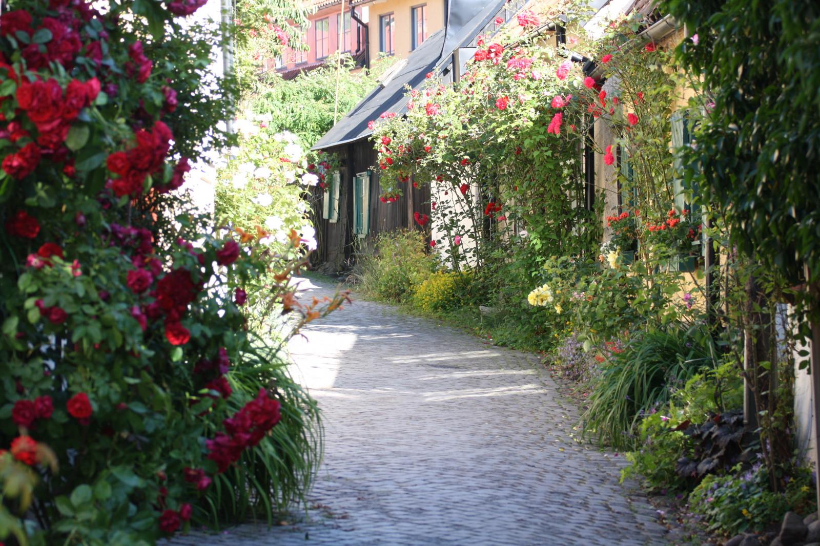 krajina, zahrada, Dům, hotel, jaro, Visby, chodník, chalupa, zadní dvorek, majetek, strom, květ, rostlina, alej, flóra, pramen, rosor, Kallis, f RJA, gotlandsf rjan, Hostel, špatný, domů, Gotland, Ringmur, almedalen, restauranger, bb, destinace, kvetoucí rostlina, keř, floristika, outdoor struktura, nádvoří, zahradní růže, růže rodina, růže objednávka, Botanická zahrada, terénní, Beachclub, uteliv, Vandrarhem, Boende, Biljetter, Barer, Stockholmsveckan