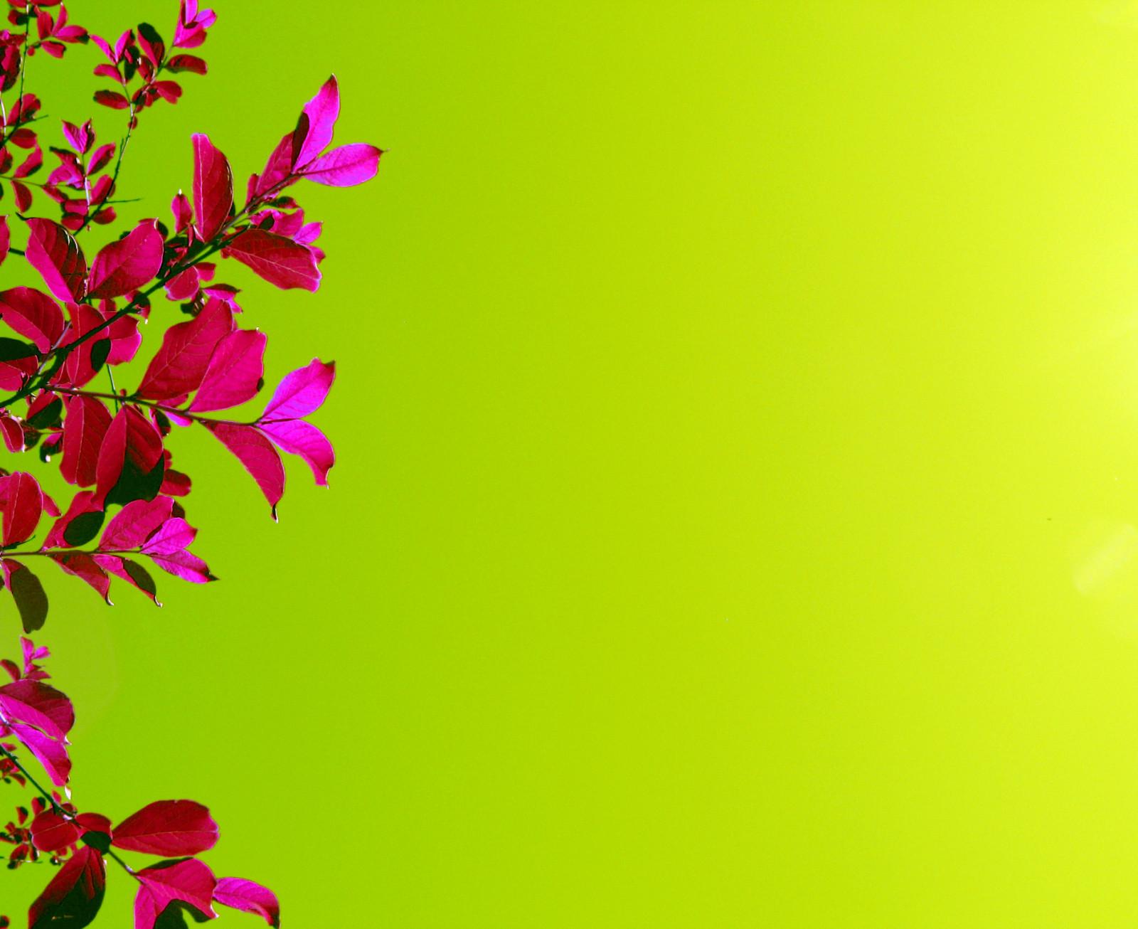 Слайд открытки цветы, зайчики целуются днем