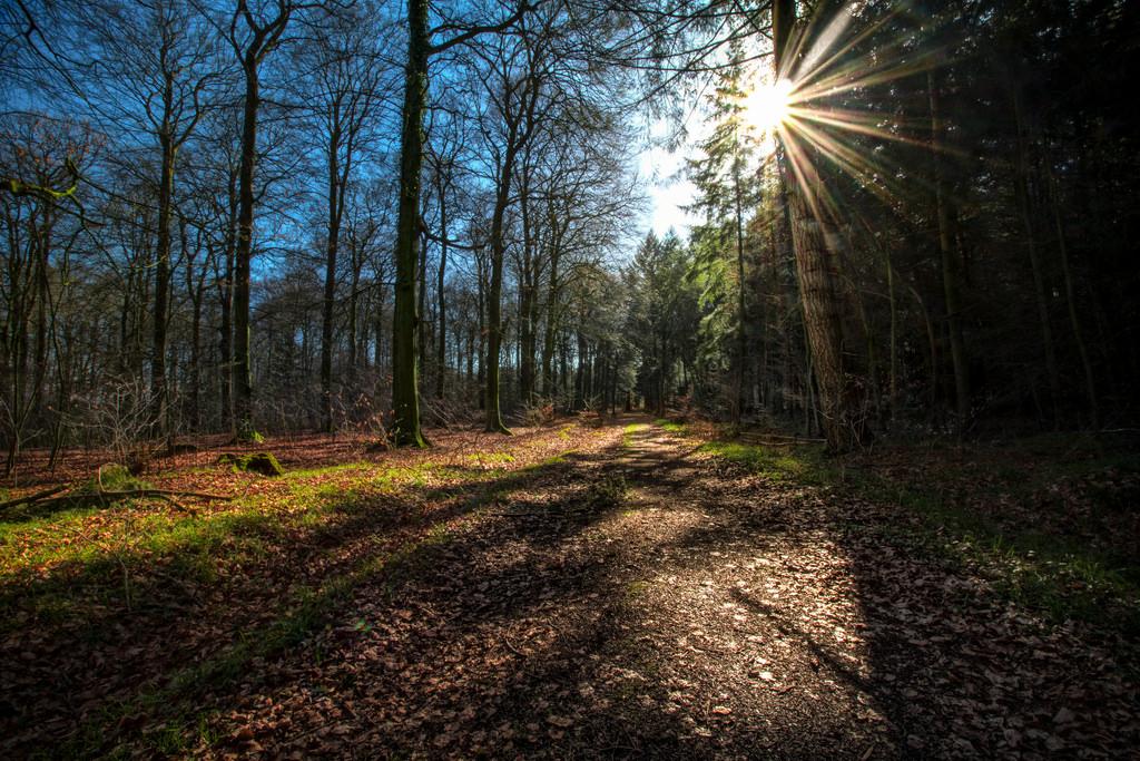 Masaüstü Güneş ışığı Ağaçlar Orman Ot Sabah Vahşi Doğa Yol