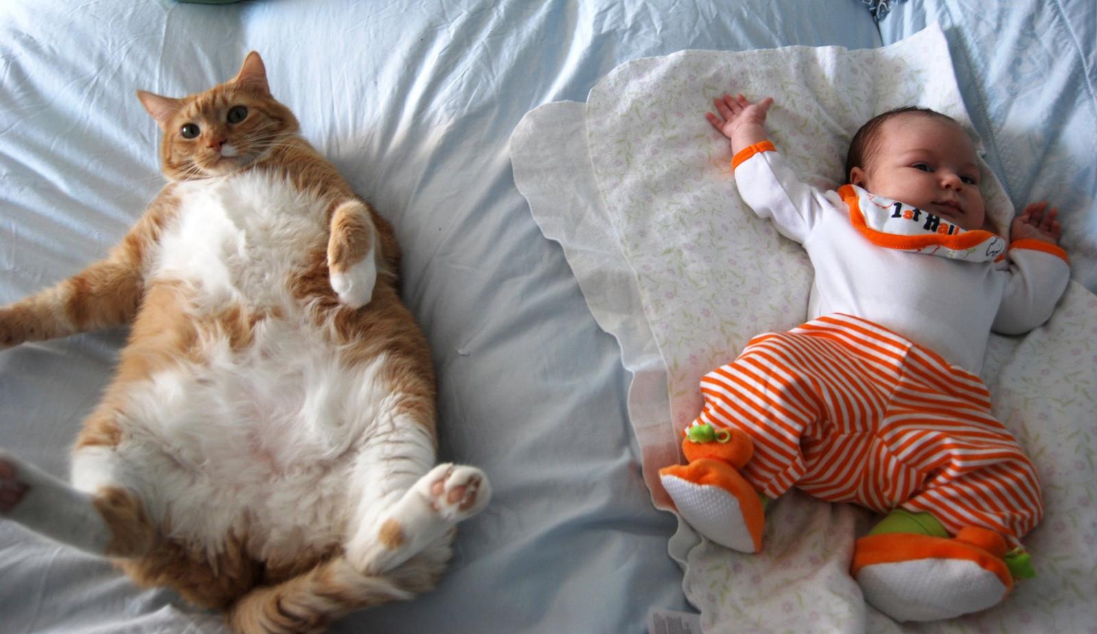 Котики смешные видео для детей, первым