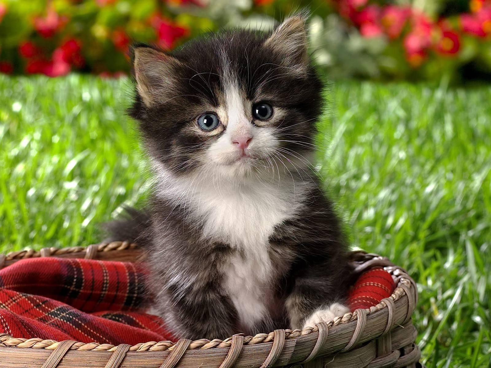 Смотреть красивые картинки котиков