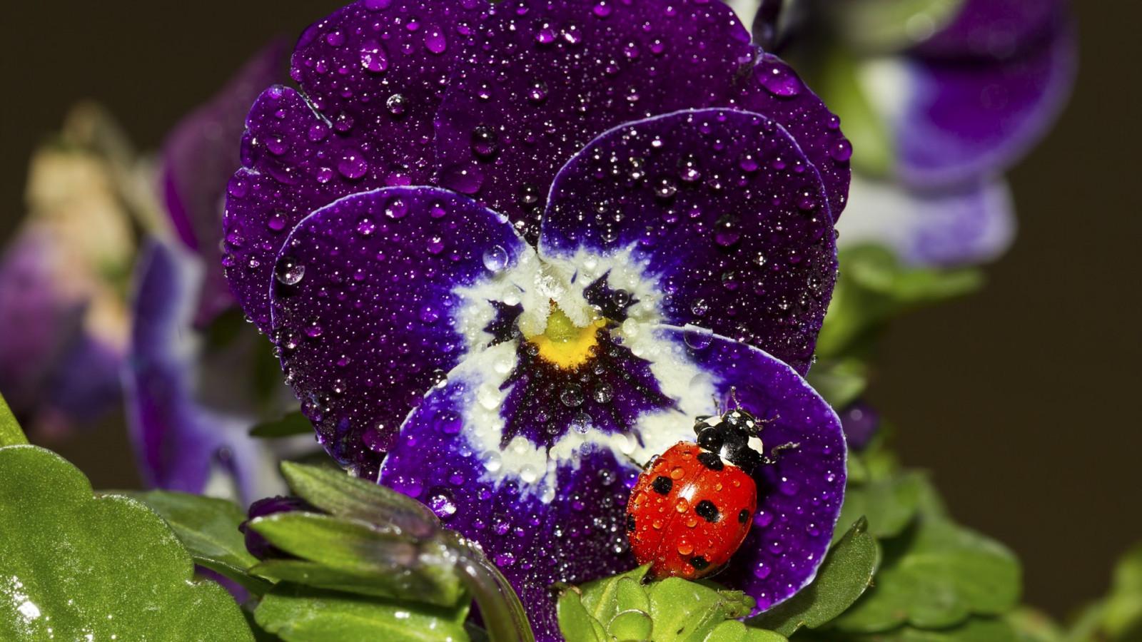 члены красивые картинки с цветы увидете видео