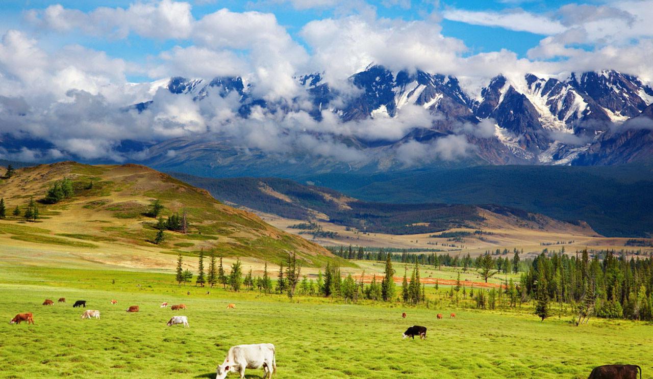 Hintergrundbilder landschaft h gel gras himmel - Windows 8 1 wallpaper hd nature ...