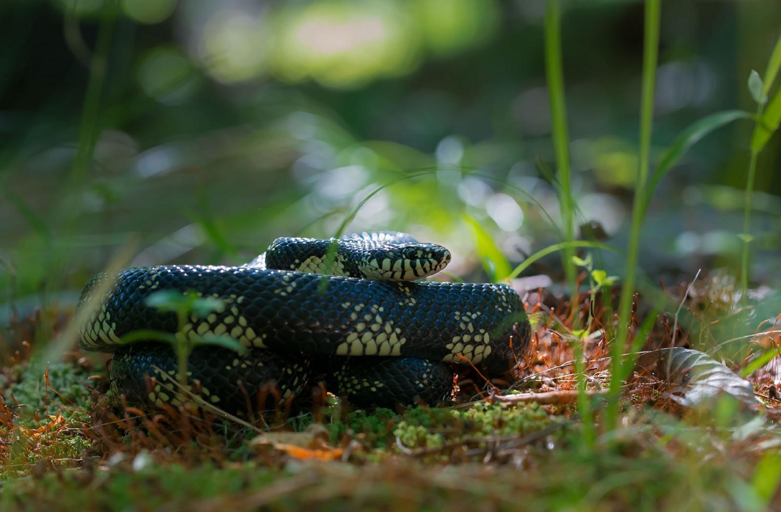 разбирать это зеленые змеи подмосковья фото и описание планете огромное количество