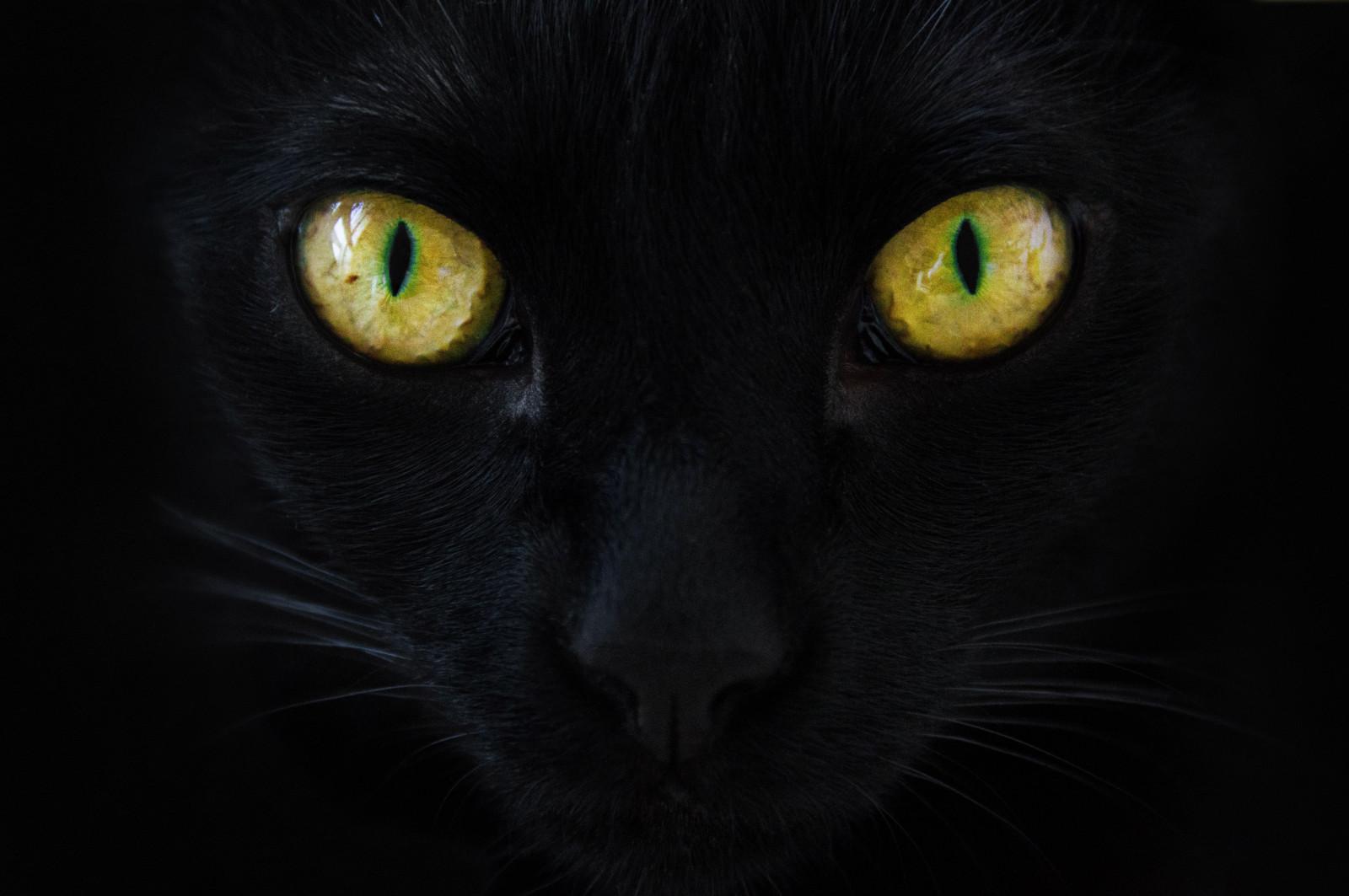 fond d 39 cran chat noir or jaune vert couleurs color couleur les yeux animal de. Black Bedroom Furniture Sets. Home Design Ideas