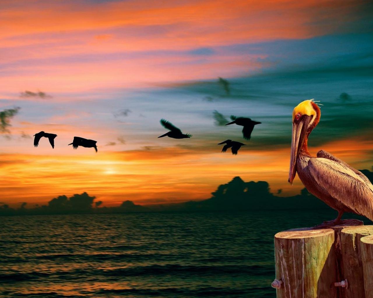 картинки с птицами на природе с морем девушка