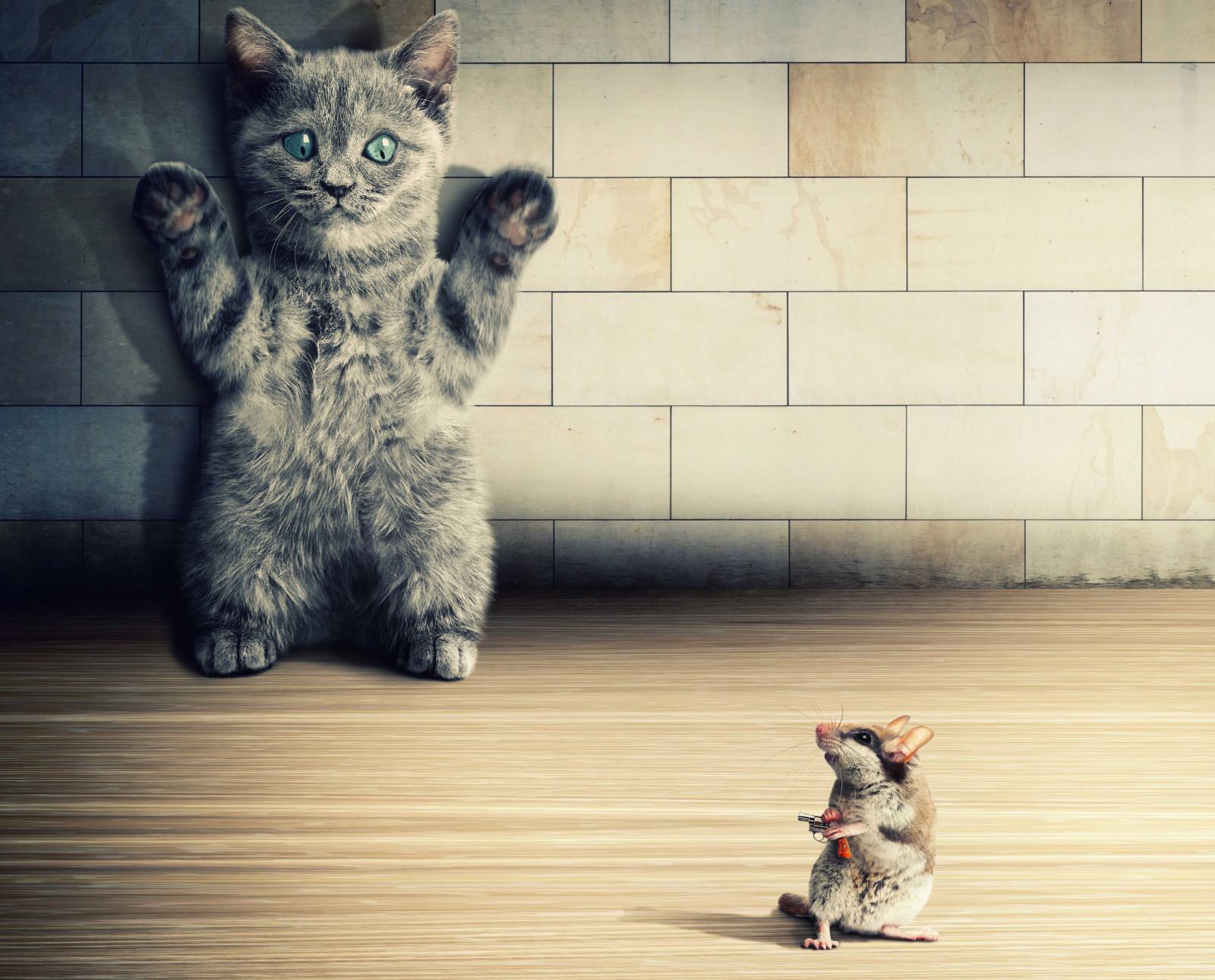 Открытки, смешные котики обои на телефон