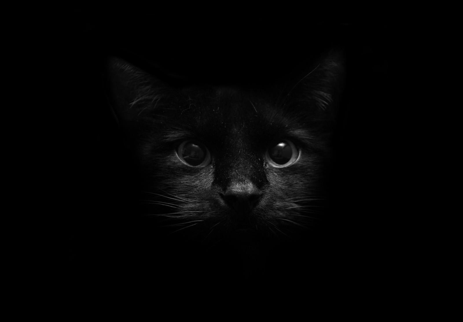 Pěkná černá kočička kurva