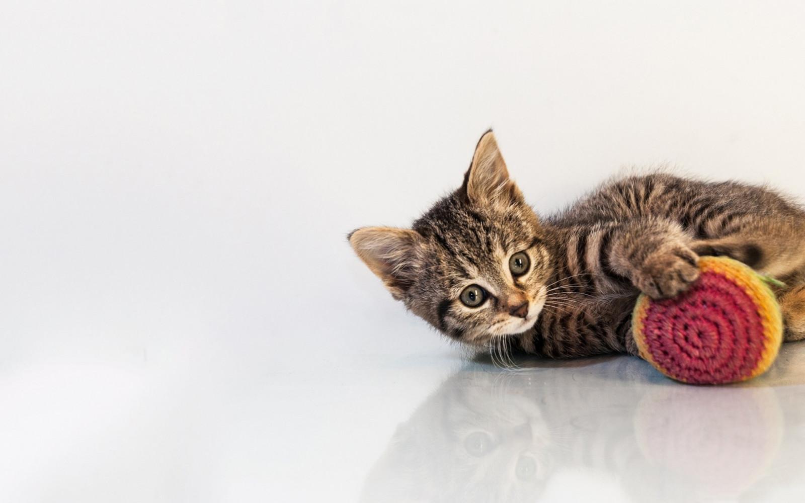 картинка с котенком для презентации лук