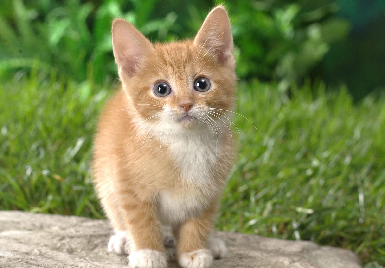 Mơ thấy con mèo điềm lành hay điềm giữ