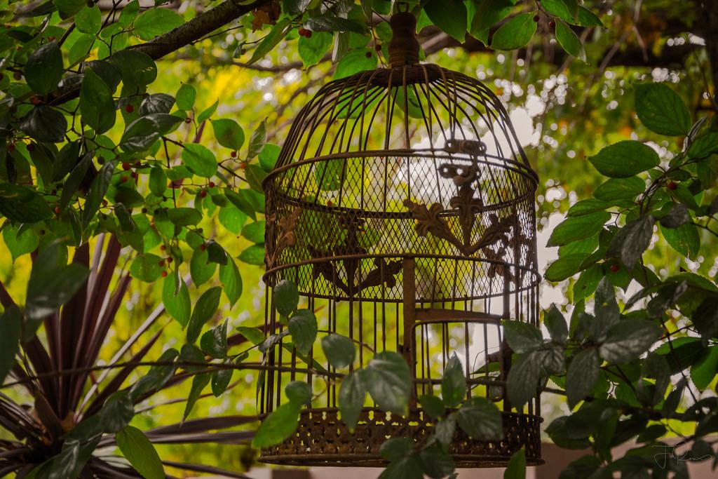 Hintergrundbilder : Bäume, Blätter, Garten, Pflanzen, Kunstwerk, Ast ...