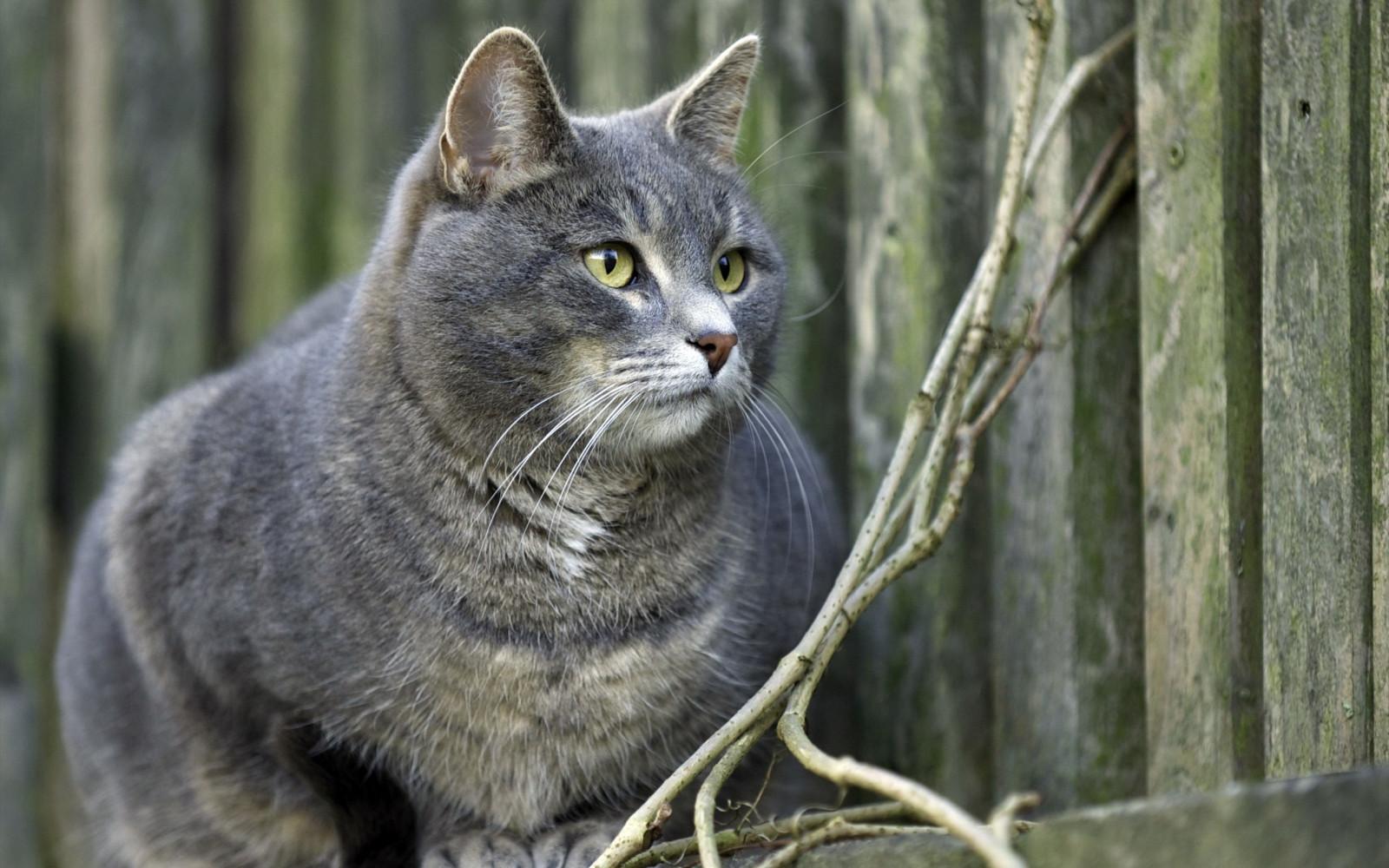 Женщин, картинки с котом серым