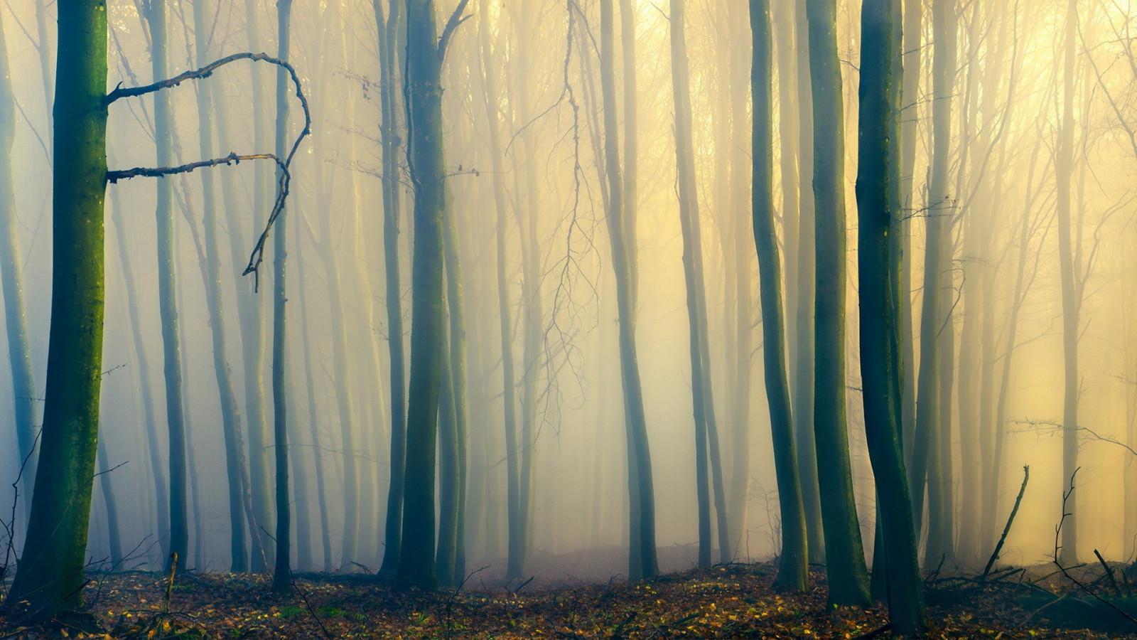 большом, туманный лес рисунок сих пор