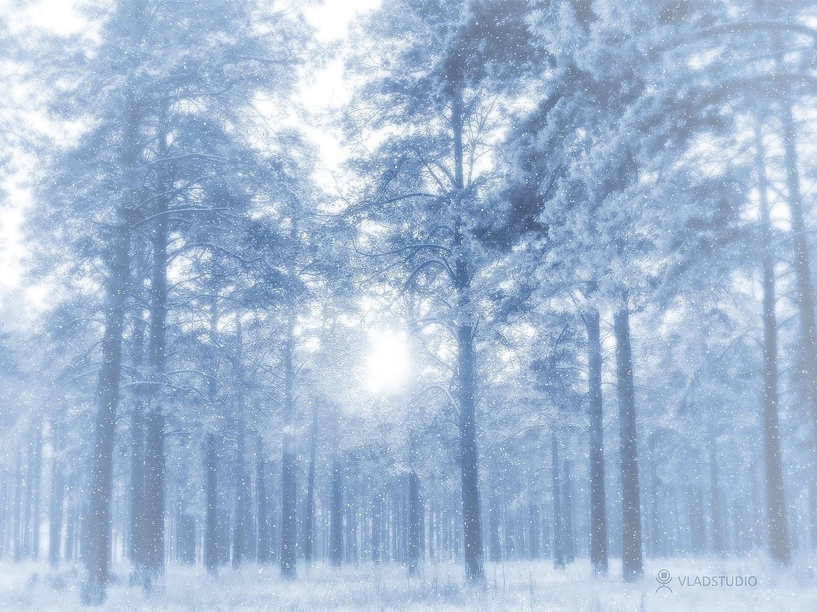 Hintergrundbilder : Sonnenlicht, Bäume, Landschaft, Wald, Natur ...