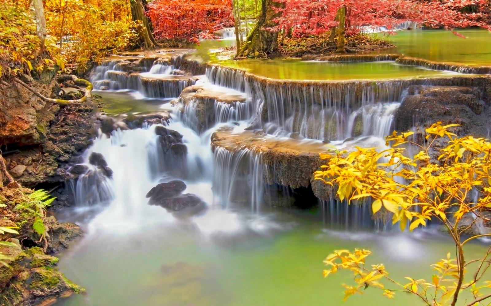 Fond d'écran : des arbres, paysage, Coloré, tomber ...
