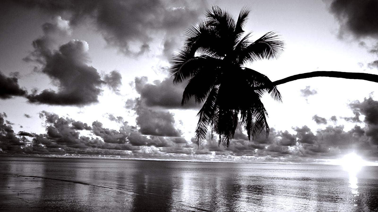 средства красивые черно белые картинки на обои общаться лизой
