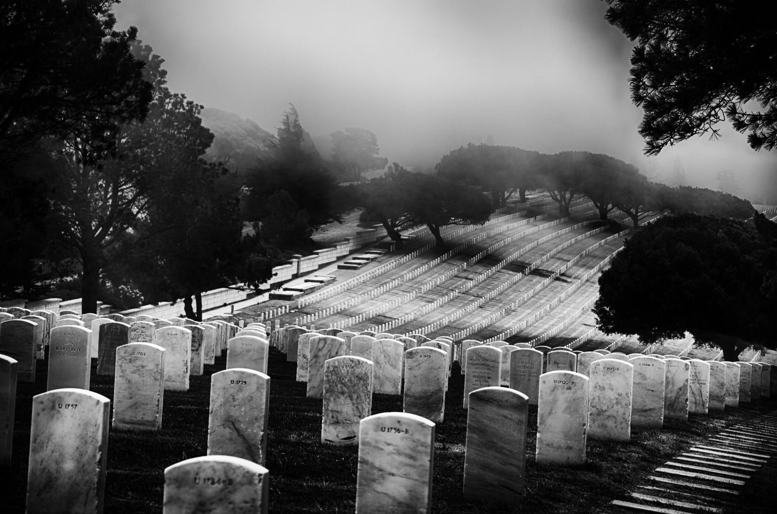 Fond d'écran : Californie, des arbres, noir et blanc, Bw ...
