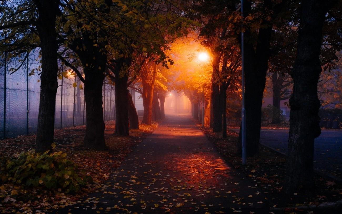 Картинки красивая ночь в парке