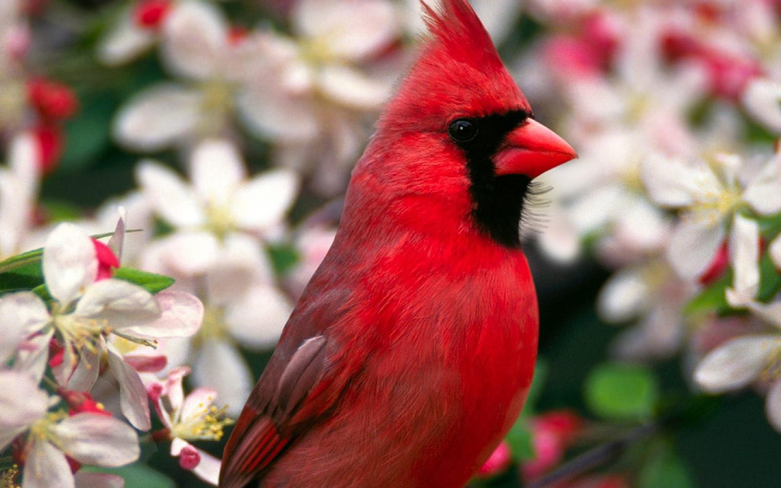 นกสีแดง ขนนก สวย ดอกไม้