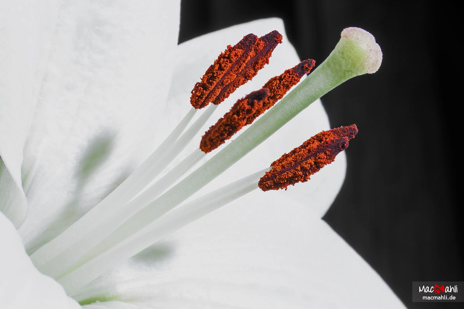 wallpaper internet flickr flower de deutschland bayern macro