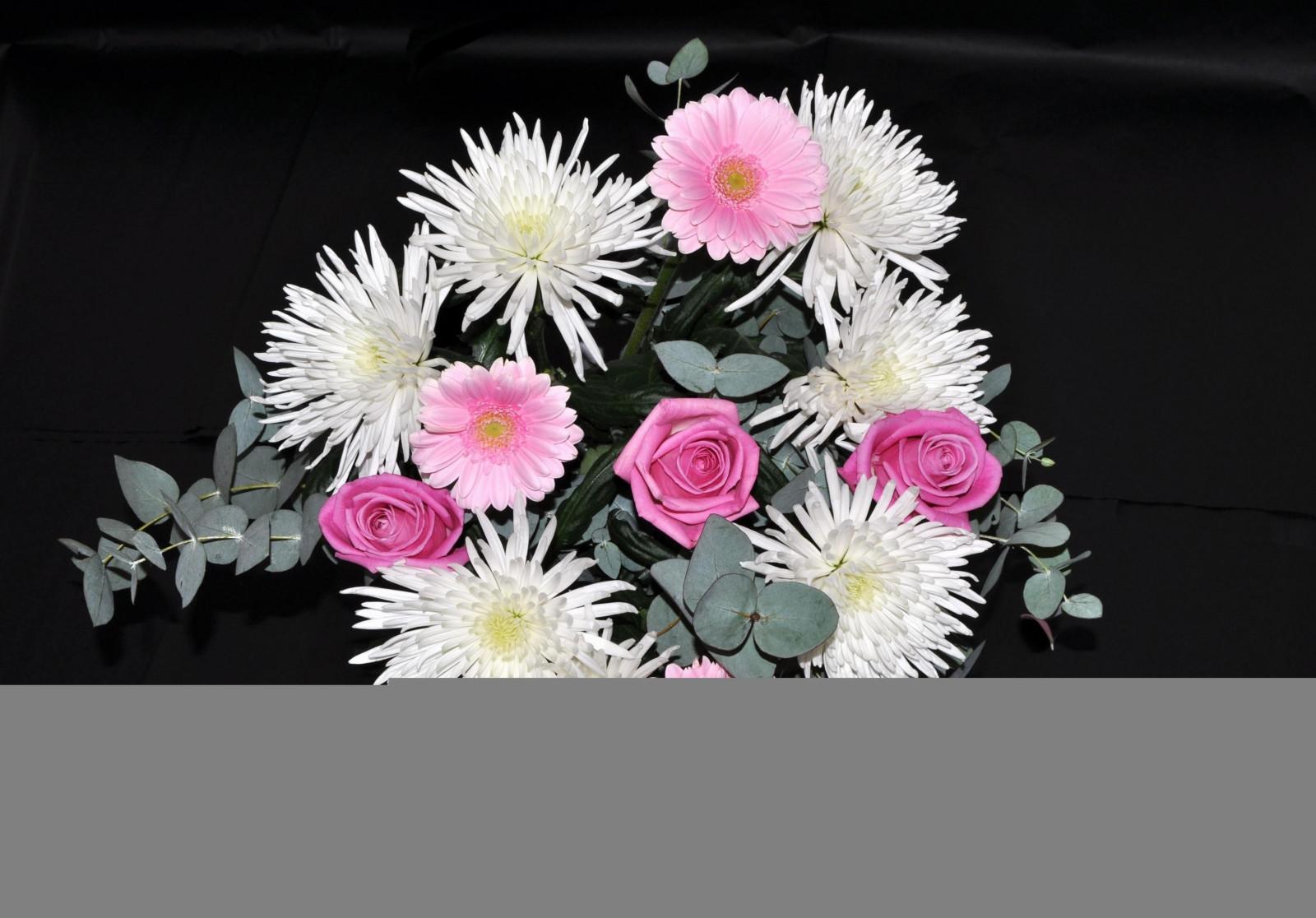 Afskårne Roser baggrunde : sort baggrund, lyserød, krysantemum, blomst, flora