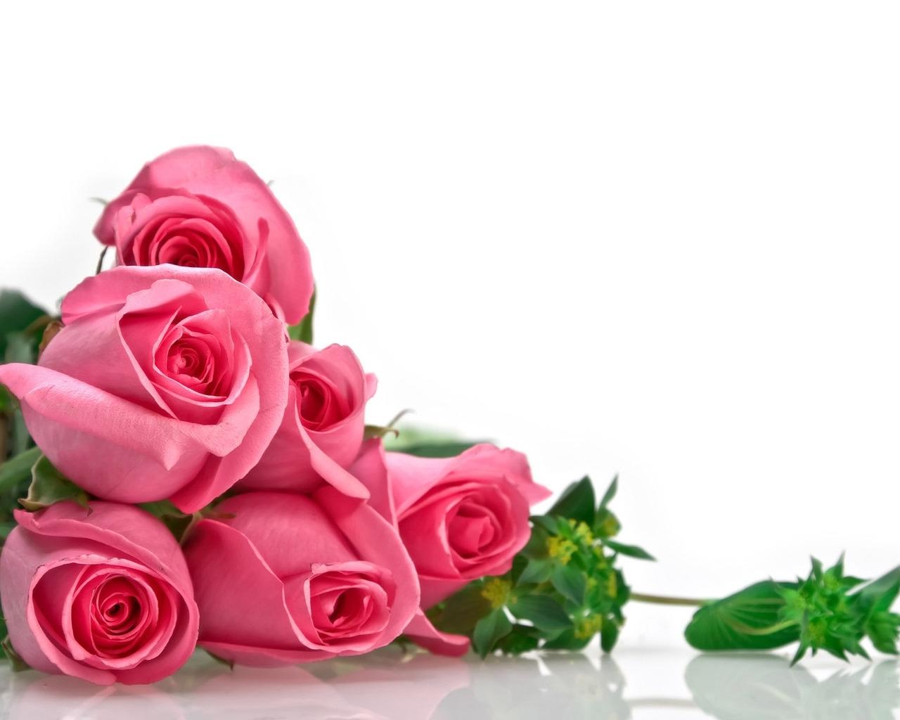 Papel De Parede Flores Rosa Mentira Flor Plantar Petala