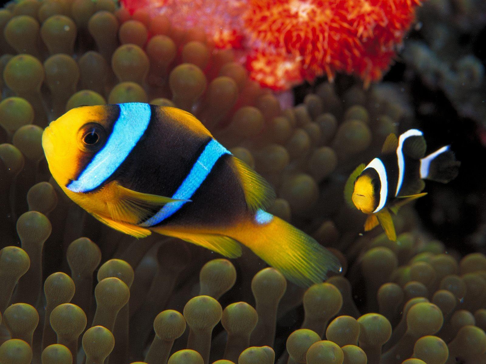 картинки про рыбок морских