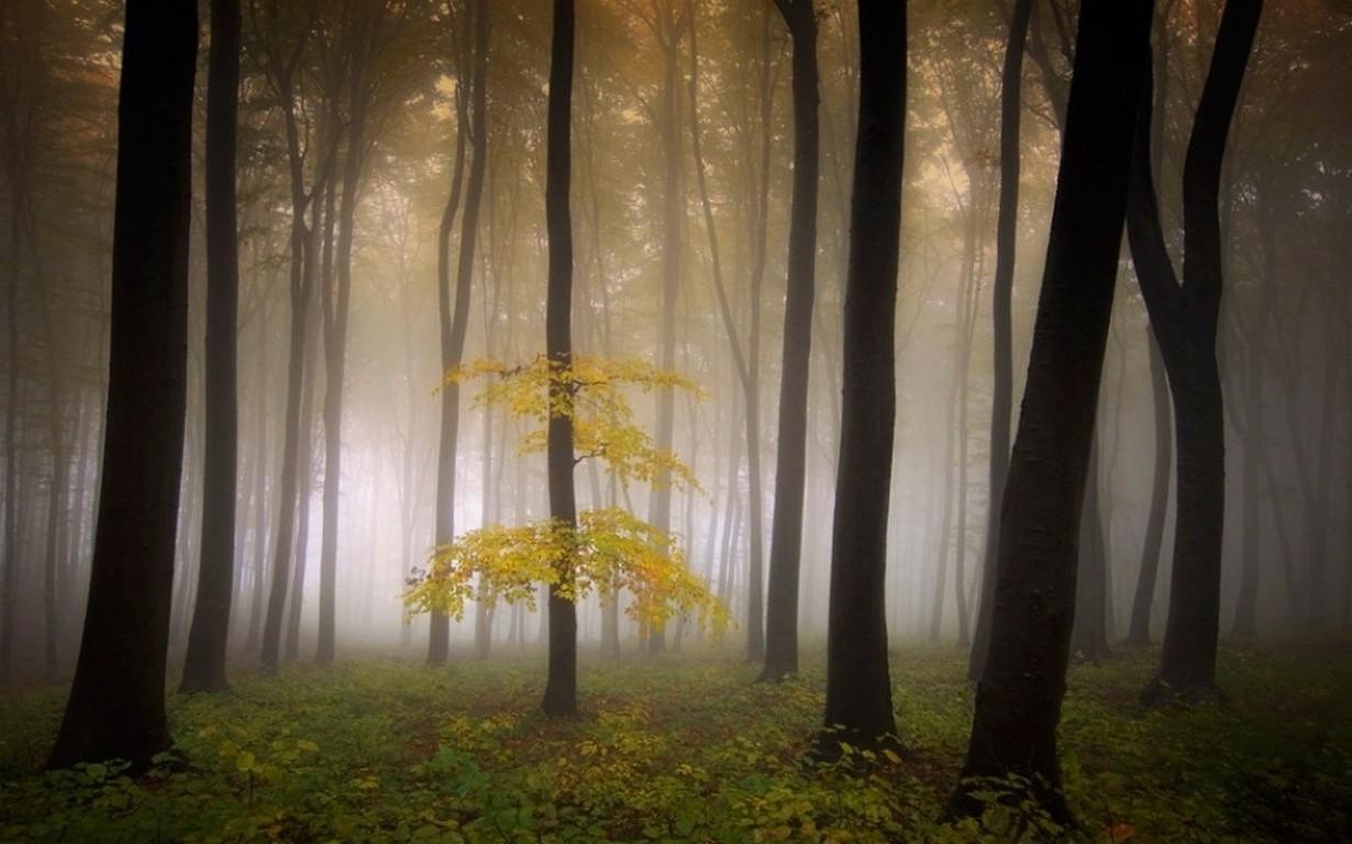 Fond Décran Lumière Du Soleil Des Arbres Paysage Forêt