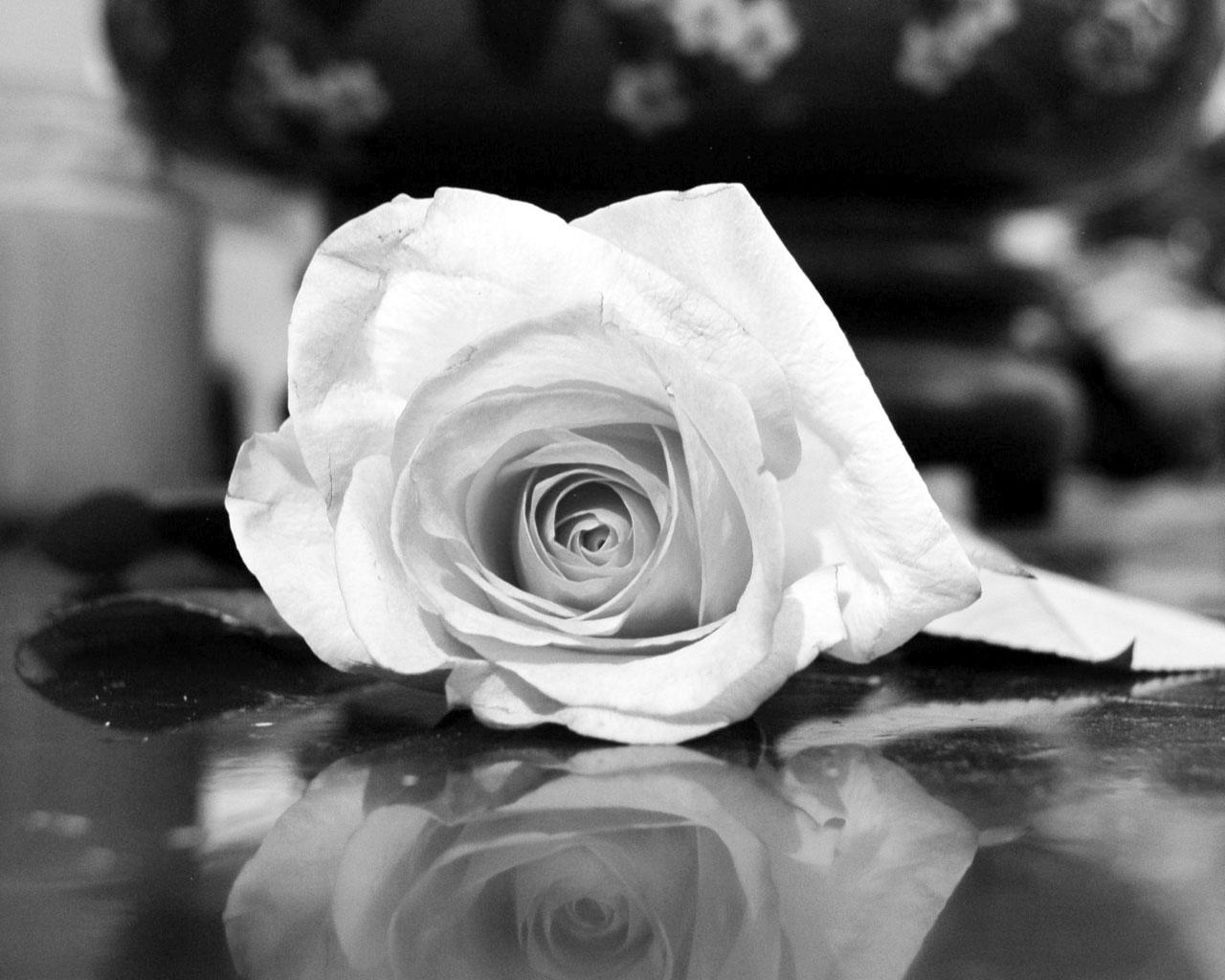 цветы на столе картинки черно-белые этих