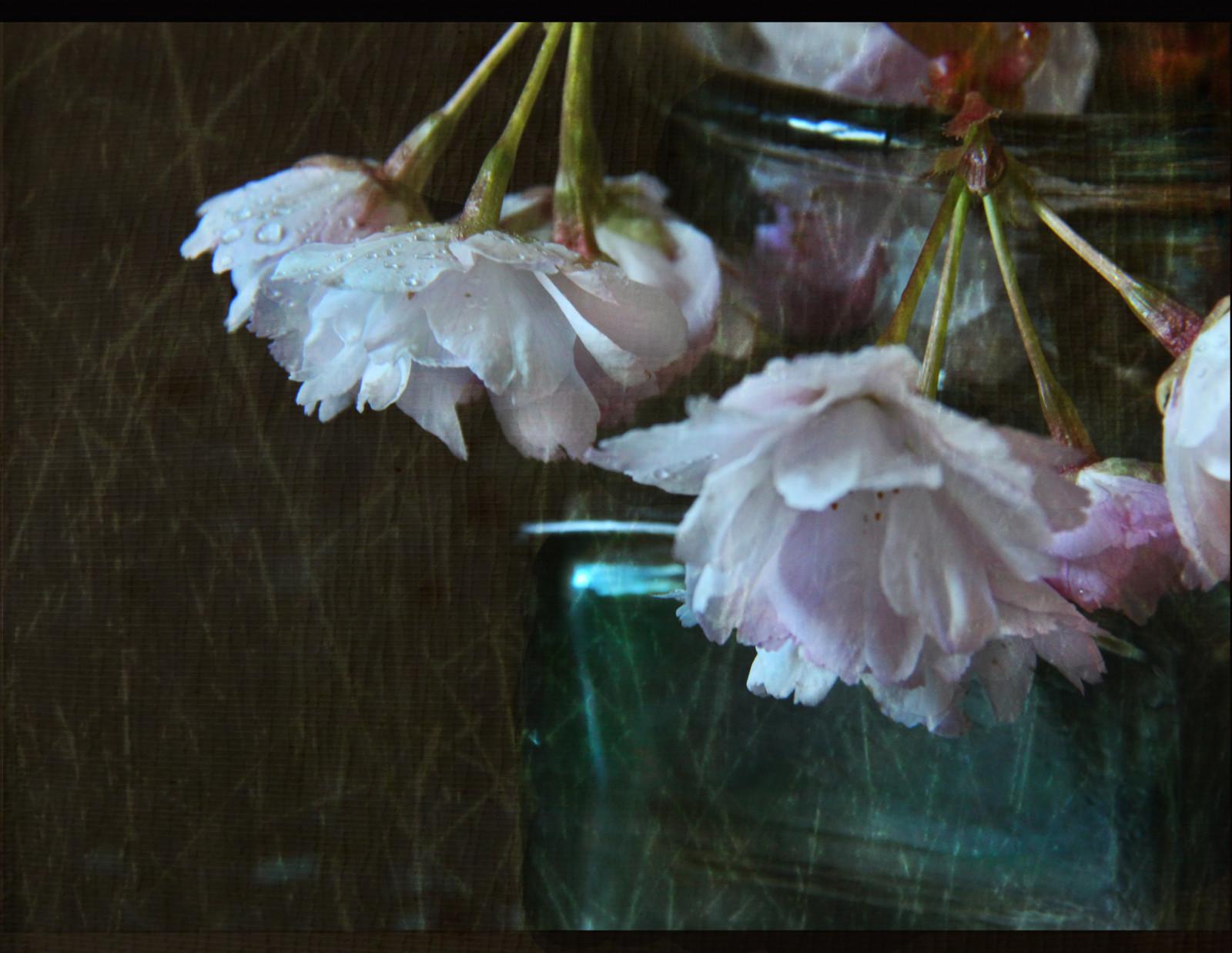 Masaüstü çiçek Pembe Bitki örtüsü Yaprakları çiçeği Bahar