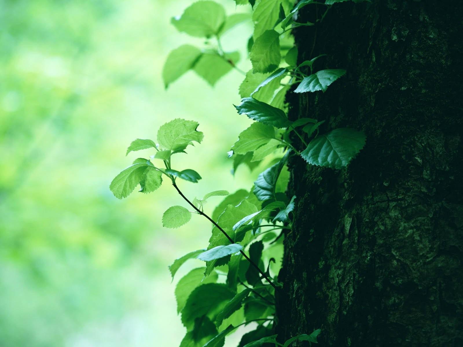 изображены постройки картинки деревья серо зеленые правило, первое