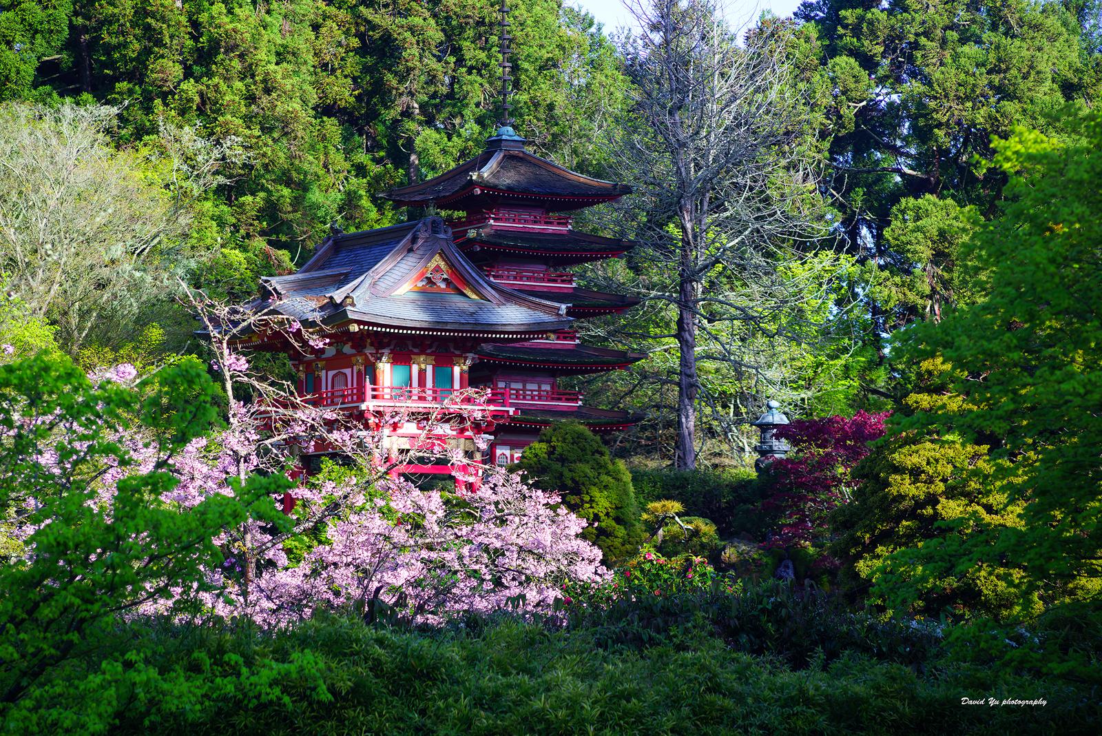 fond d 39 cran paysage la nature herbe maison parc national japonais th printemps. Black Bedroom Furniture Sets. Home Design Ideas