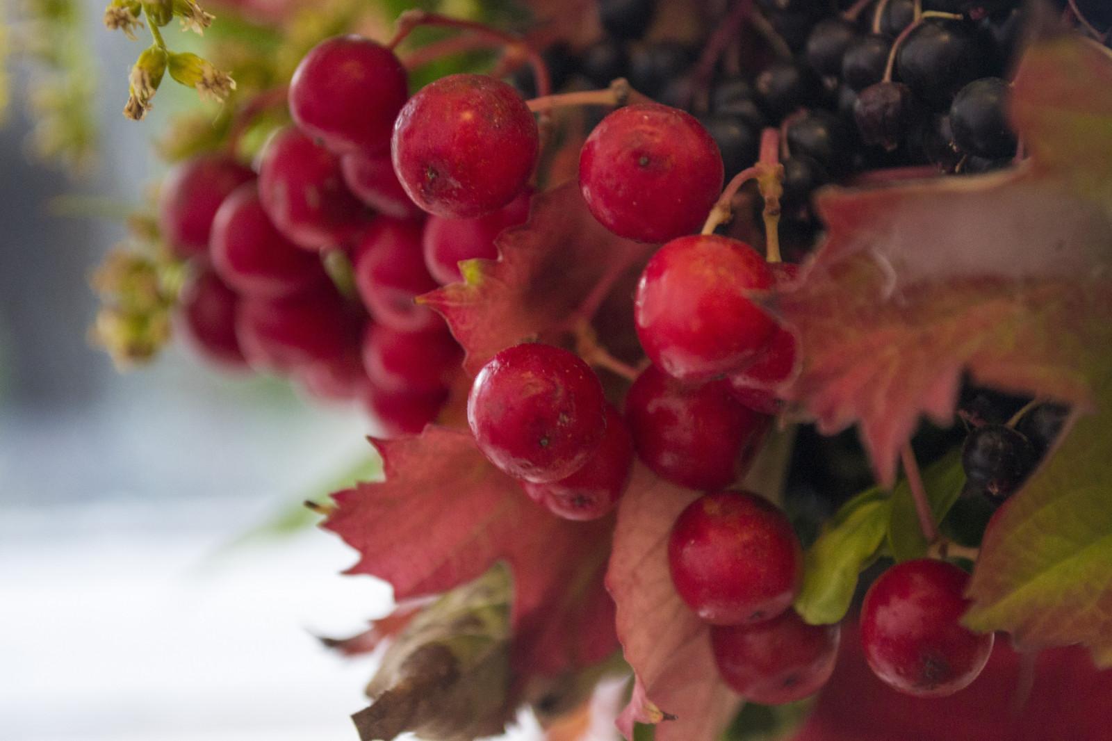 hintergrundbilder lebensmittel blumen rot ast frucht sommer bl hen rote bl tter. Black Bedroom Furniture Sets. Home Design Ideas