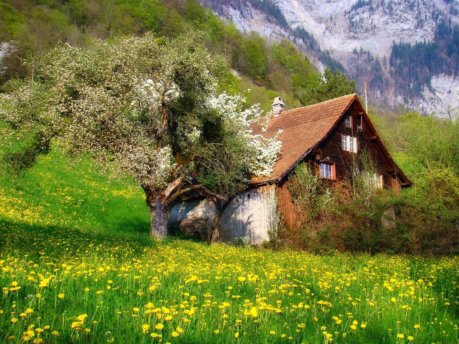 Fond d'écran : des arbres, paysage, Montagnes, fleurs, la nature, champ, la photographie, vert ...
