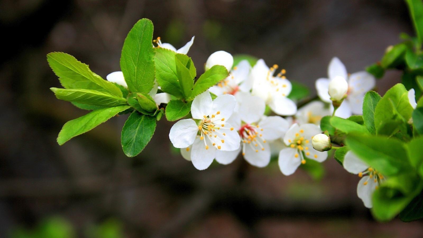 Приколы, картинки для рабочего стола природа весна на весь экран